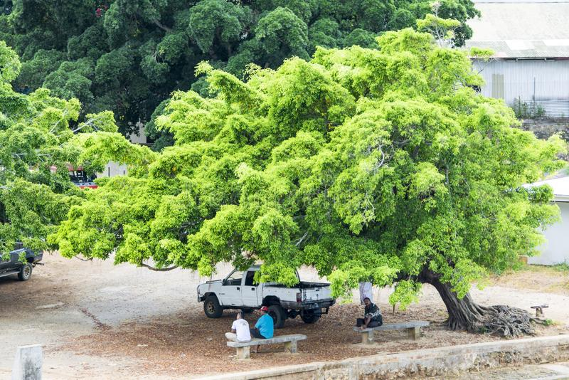 Huge tree makes enough shade for men and car Tonga stock image