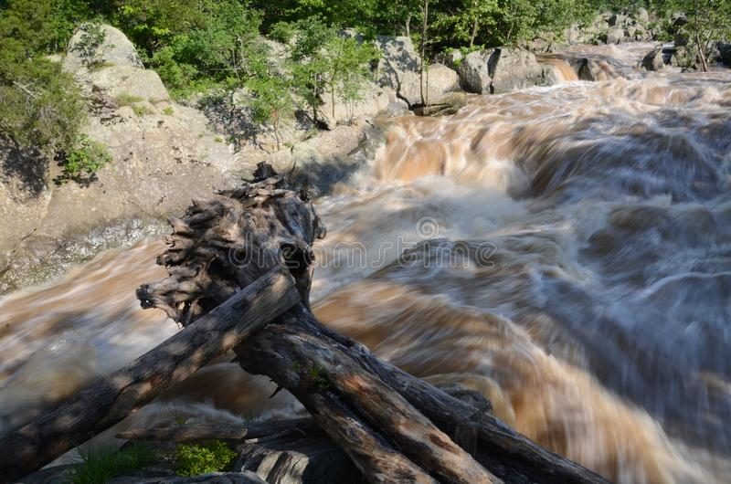 Huge tree thrown up out of the Potomac River. A huge tree trunk is swept down by the raging force of the flooding Potomac River at Great Falls, Maryland stock images