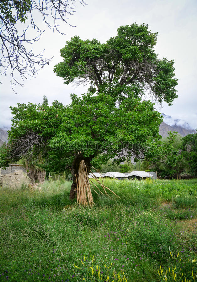 Huge trees and the garden. In Yunnan, China royalty free stock photos