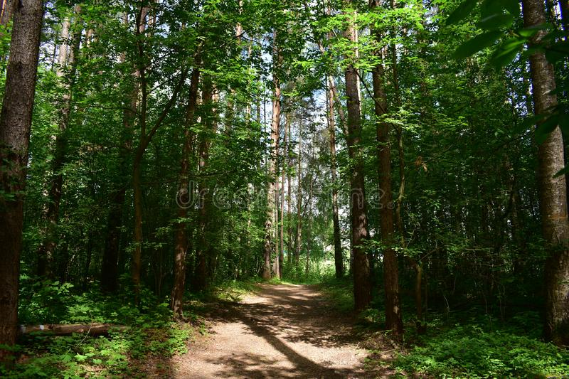 Huge trees, shady dirt path in the summer Park. The lower Park begins with a flatter relief stock photo