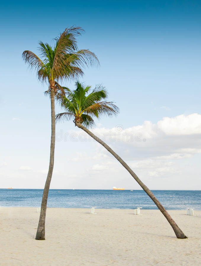 Download Hugging Palm Trees Stock Photo - Image: 23715410