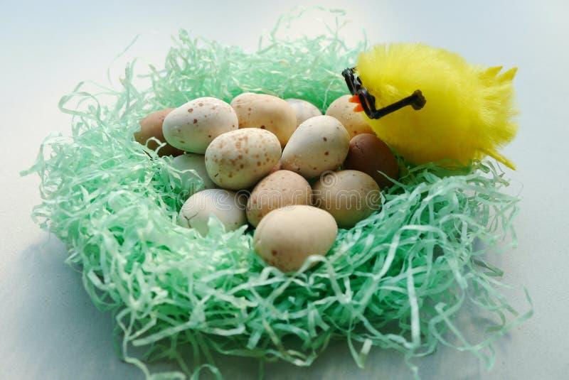 Huhn, das Eier im Nest schaut lizenzfreies stockbild