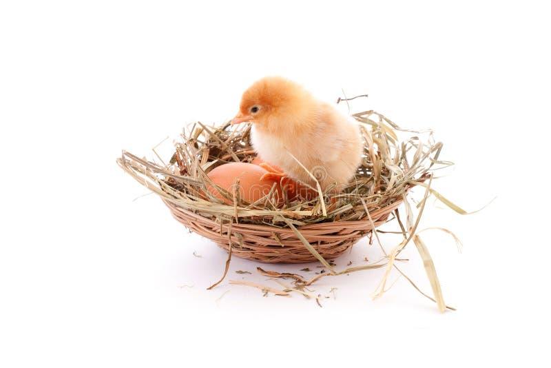 Huhn im Nest lizenzfreie stockfotografie