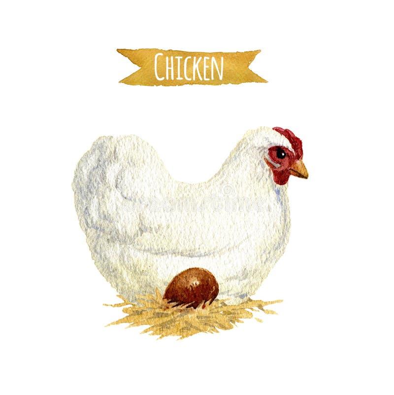 Huhn mit Ei, Aquarellillustration stock abbildung