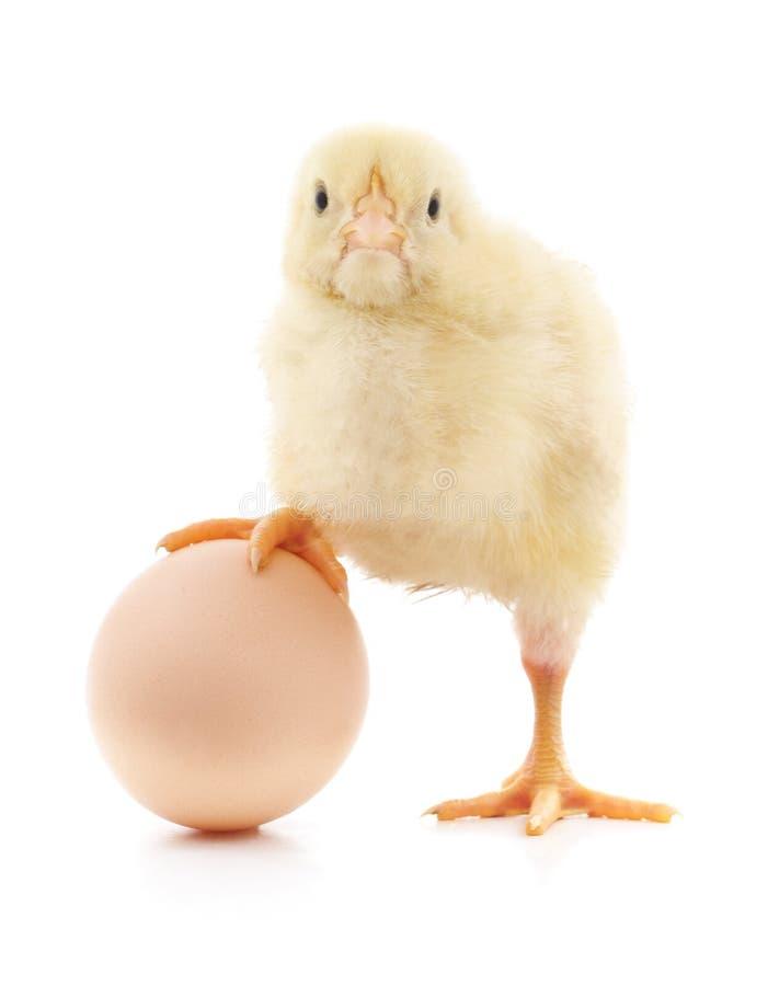 Download Huhn und Ei stockfoto. Bild von feiern, gelb, schuß, bauernhof - 90236090