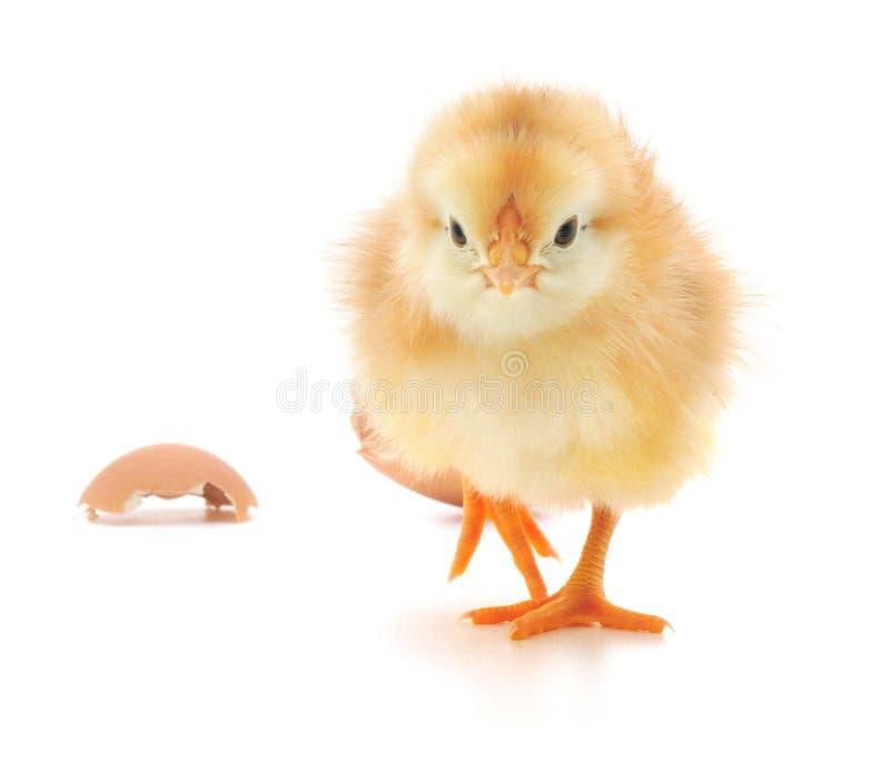 Huhn und eine Eierschale lizenzfreies stockfoto