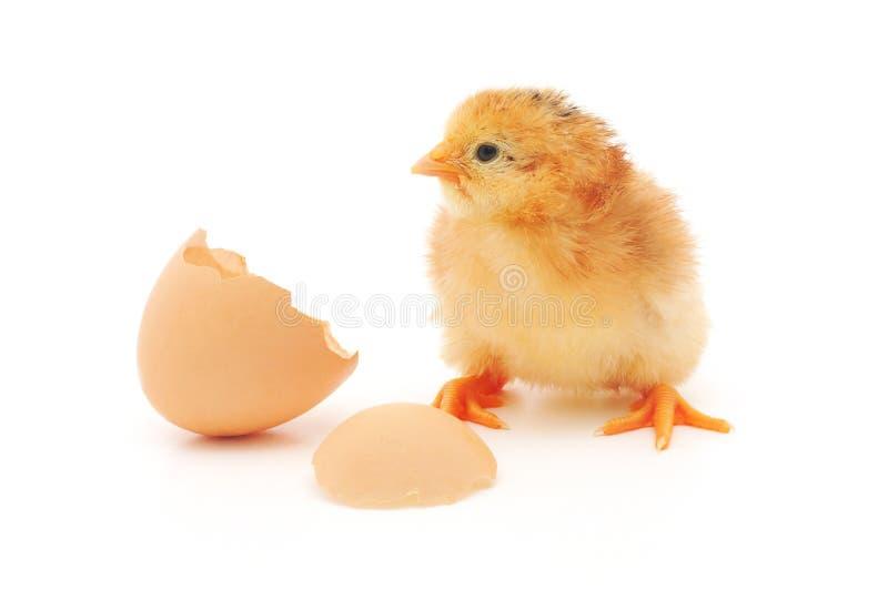 Huhn und eine Eierschale lizenzfreie stockfotografie