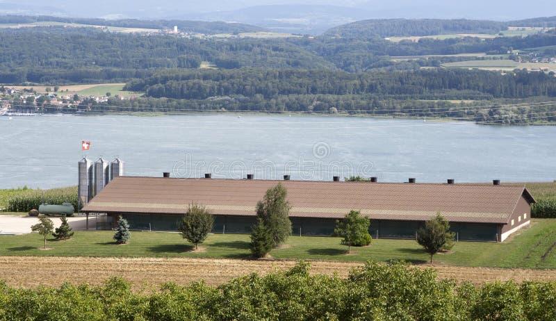 Huhnbauernhof lizenzfreies stockfoto