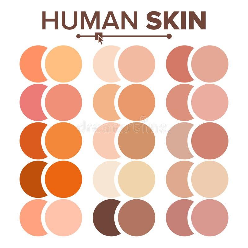 Huid Menselijke Vector Diverse Grafiek van Lichaamstonen Realistisch Textuurpalet Illustratie royalty-vrije illustratie
