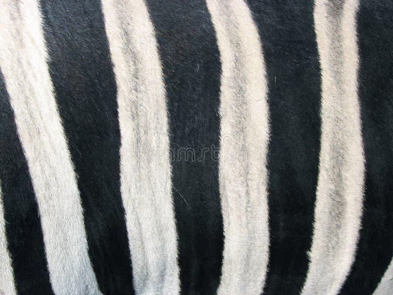 Huid van een zebra royalty-vrije stock afbeeldingen