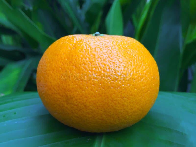 Huid van sinaasappel royalty-vrije stock afbeeldingen