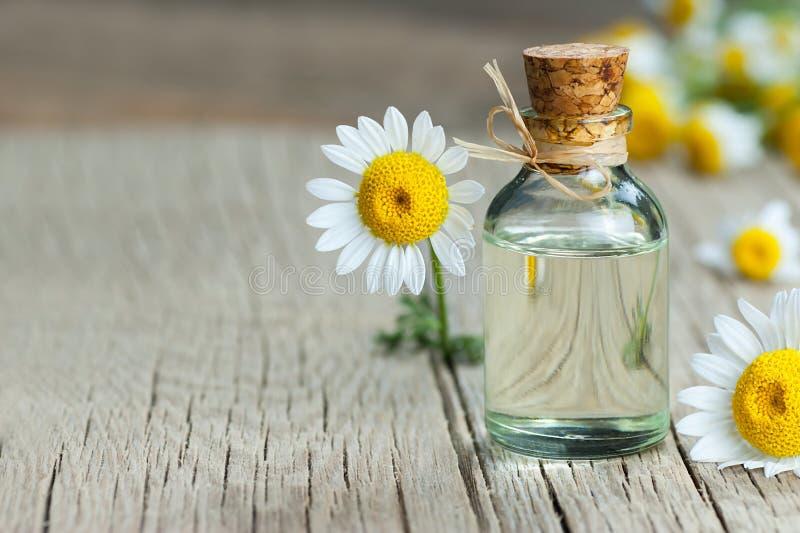 Huile essentielle de camomille dans la bouteille en verre avec les fleurs fra?ches de camomille, huile parfum?e de marguerite, tr photographie stock