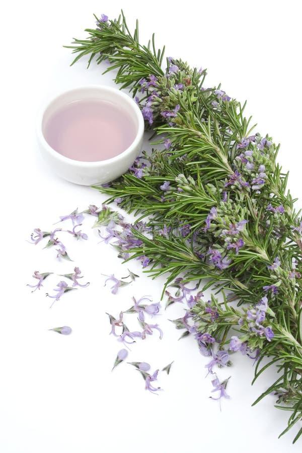 Huile essentielle de Rosemary pour aromatherapy image libre de droits