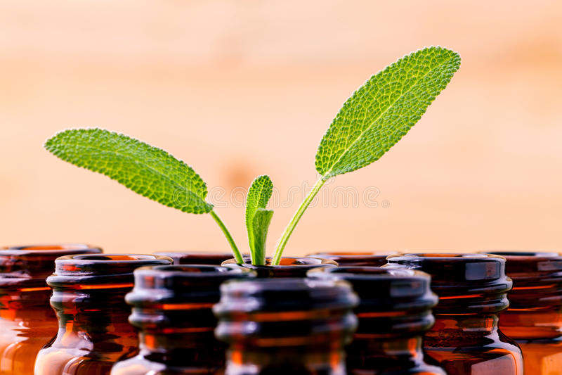 Huile essentielle de station thermale de sauge naturelle d'ingrédients pour l'aromatherapy avec image stock