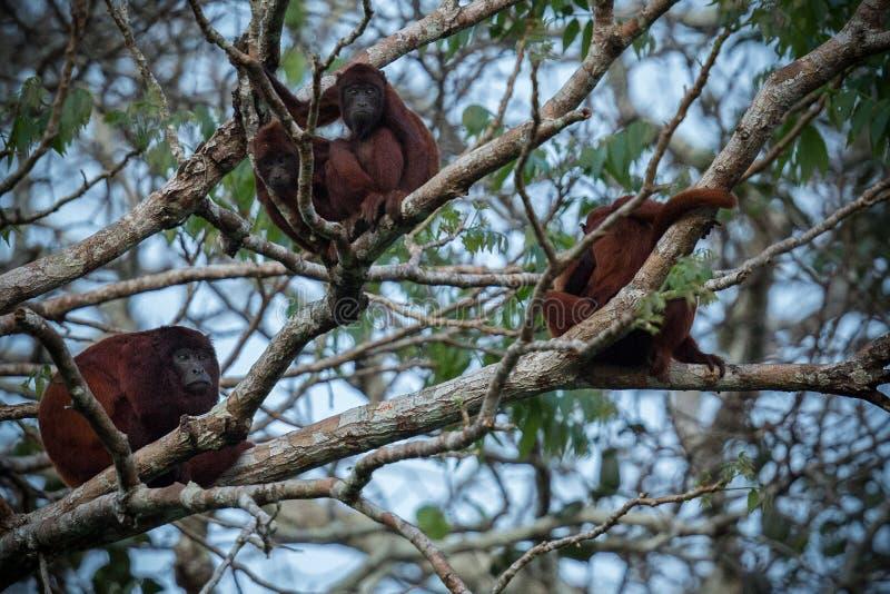 Huileraap op een boom in de aardhabitat stock fotografie