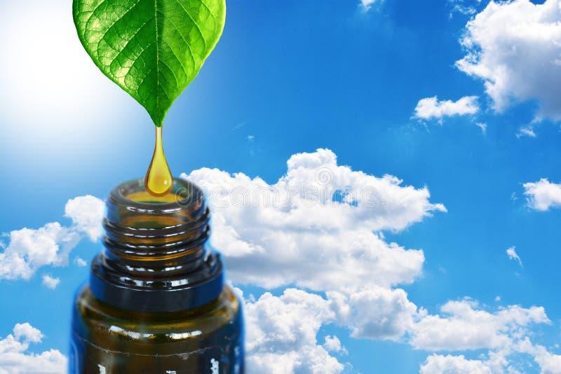Huiles essentielles d'Aromatherapy en tant que remèdes naturels avec de l'huile s'égouttant des feuilles vertes sur les bouteille photographie stock libre de droits