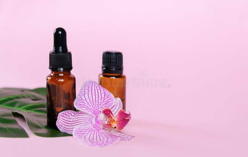 Huiles essentielles , diverses bouteilles aromathérapie sur fond rose Aromathérapie et concept de parfums photographie stock