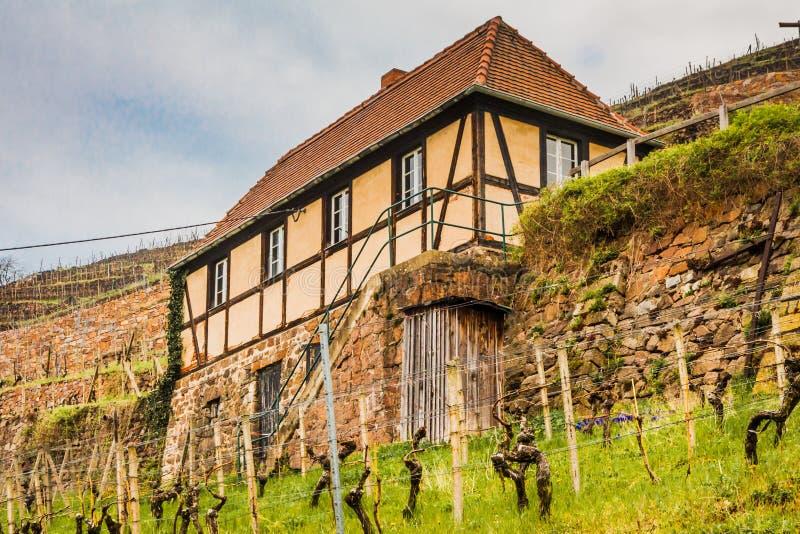 huis in de wijngaard stock afbeelding