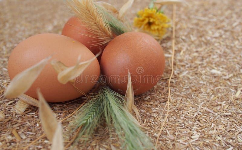 """Huis die †koken """"ruwe kippeneieren royalty-vrije stock foto's"""