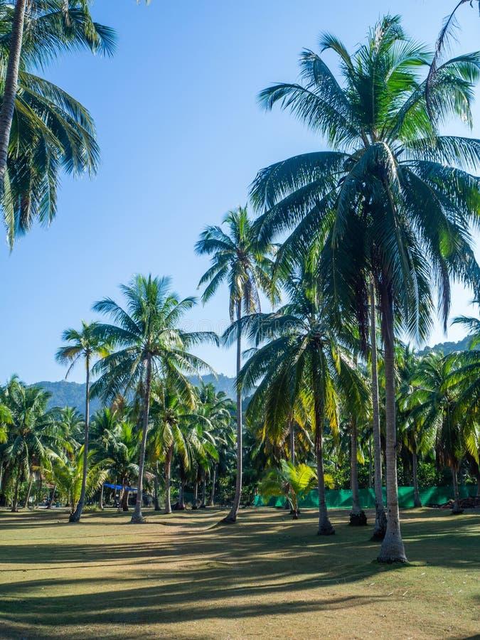 Huis diep in het palmbosje royalty-vrije stock afbeeldingen
