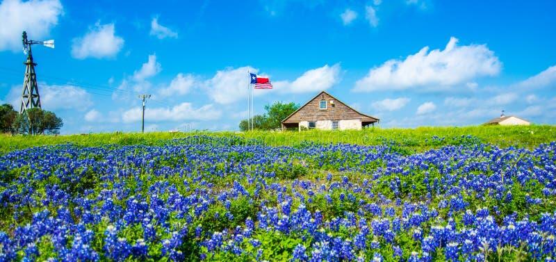 Huis door bluebonnets wordt omringd die stock afbeeldingen