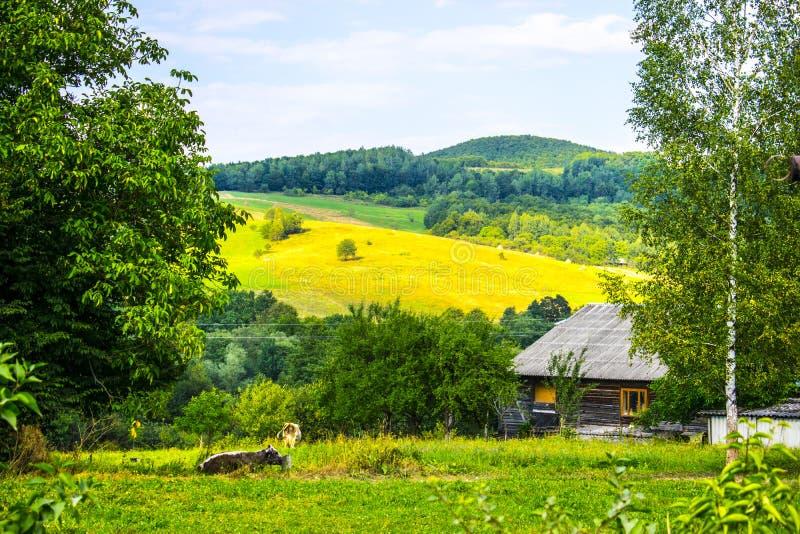Huis en koeien in de bergen stock afbeeldingen