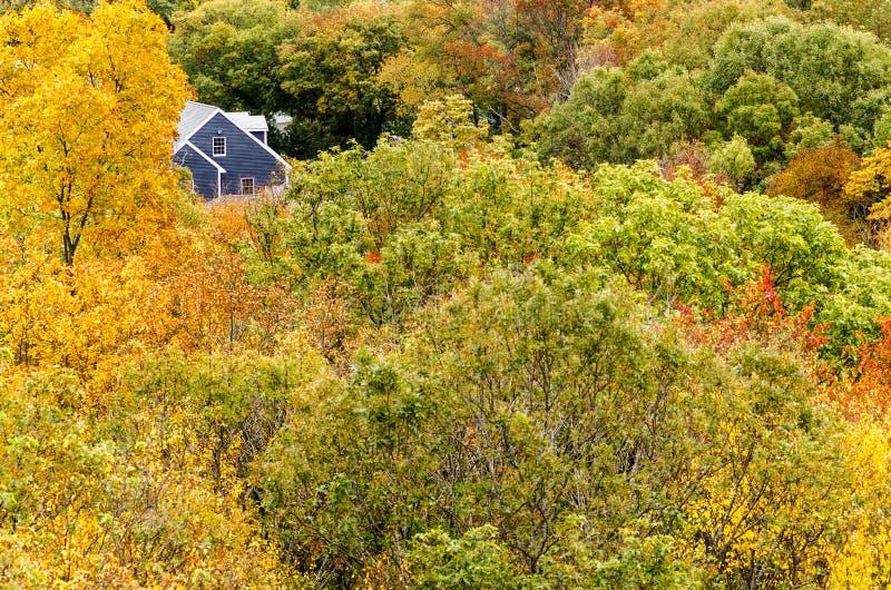 Huis en treetops royalty-vrije stock foto's