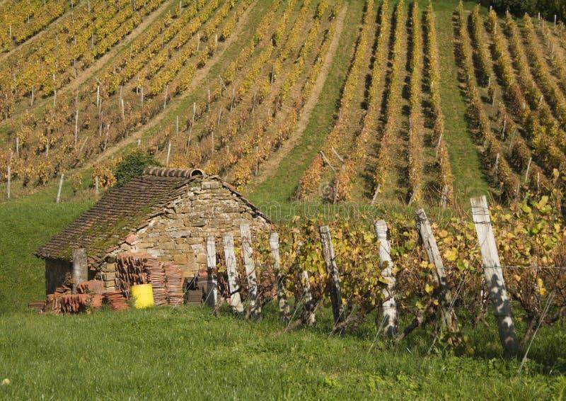 Huis en wijngaard in het hart van het Juragebergte, Arbois, Frankrijk stock afbeeldingen