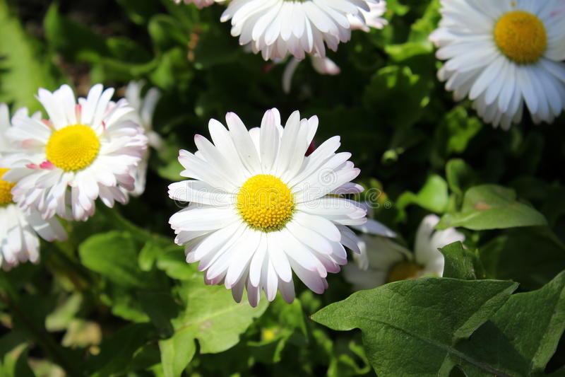 Huis en wilde bloemen royalty-vrije stock foto's