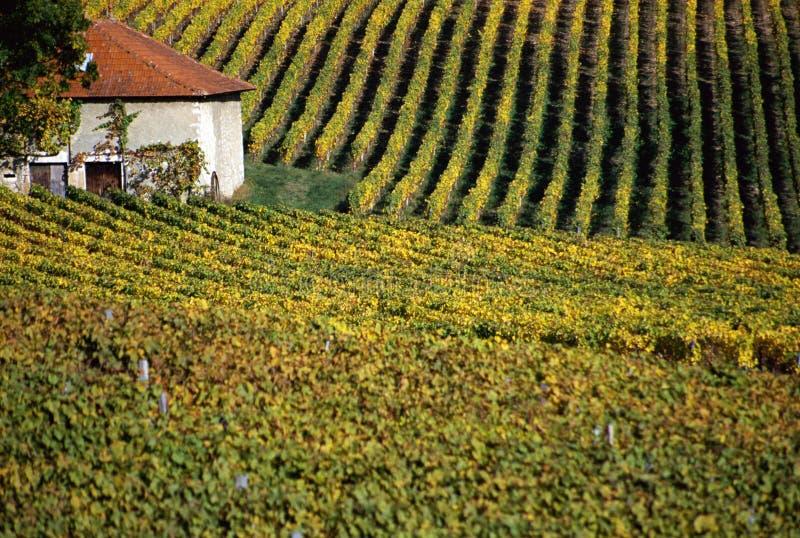 Huis in het hart van de wijngaarden royalty-vrije stock foto's