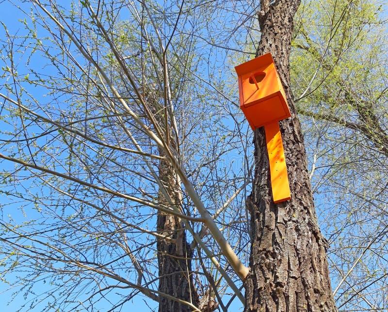 Huis van vogels in de boom in het park royalty-vrije stock afbeelding