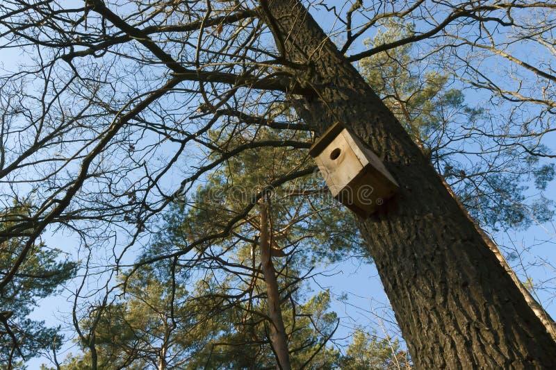 Huis voor vogels op de vertakte eiken boom stock fotografie