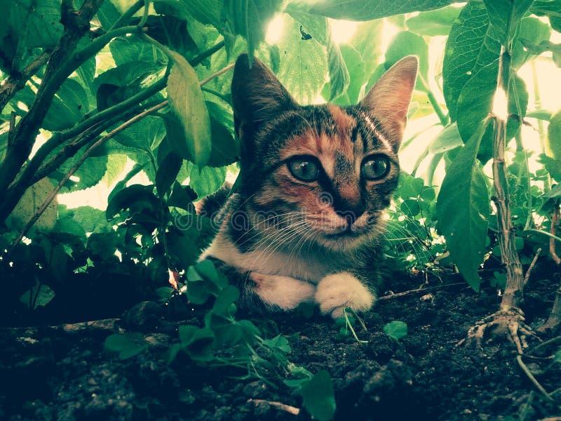 Huis wilde kleurrijke verborgen kat stock foto