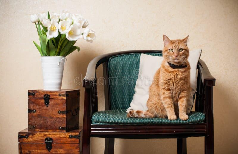 Huisbinnenland, kat royalty-vrije stock foto's