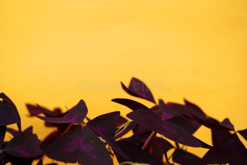 Huisbloemen over gele achtergrond stock foto