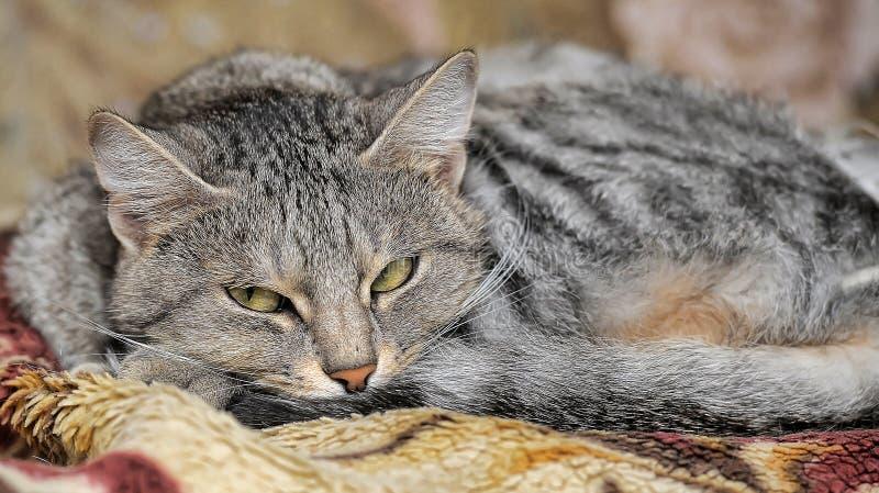 Close-up Van Een Op Een Bed Liggen En Kat Die Droevig