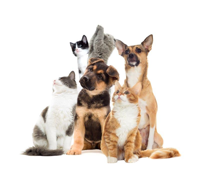 Huisdieren het kijken royalty-vrije stock foto