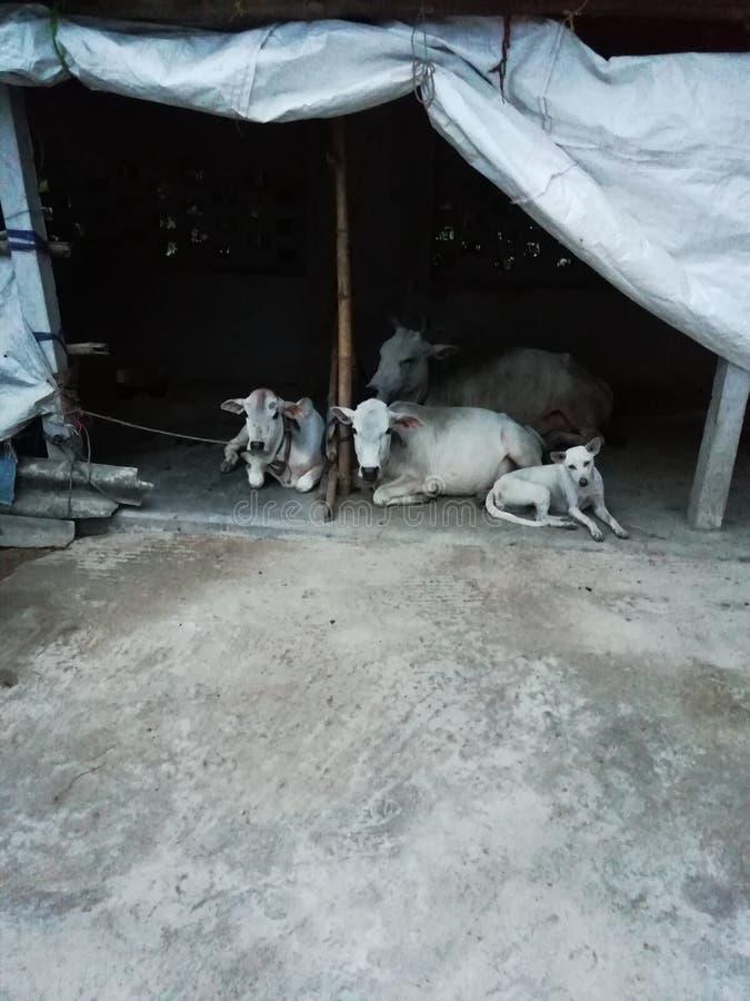 Huisdieren in hun rust loods stock foto's