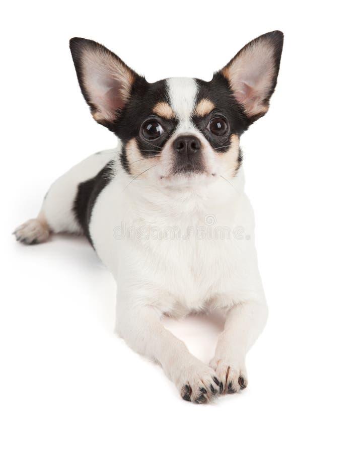 Huisdierendrager stock afbeeldingen