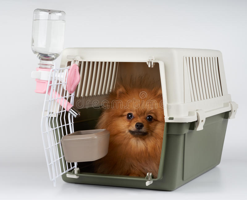 Huisdierendrager met binnen hond stock afbeeldingen