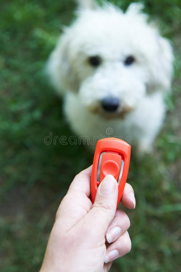 Huisdiereneigenaar Opleidingshond die Clicker gebruiken stock foto