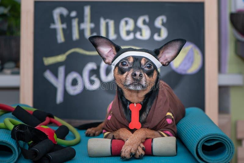 Huisdierenfitness, sport en levensstijlconcept Grappige hond †‹â€ ‹in sportkleding in opleiding, royalty-vrije stock foto's