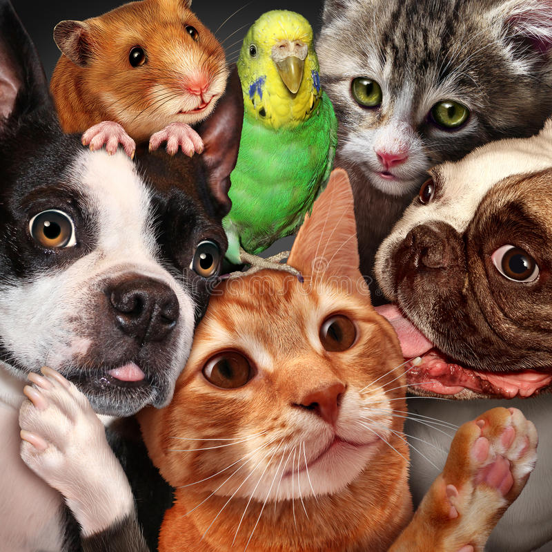 Huisdierengroep stock illustratie
