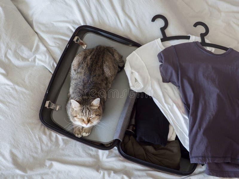 Huisdierenkat klaar om slaap in koffer met bagage op bed te reizen stock foto