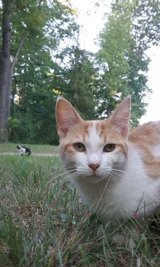 Huisdierenkatten in de werf royalty-vrije stock foto's