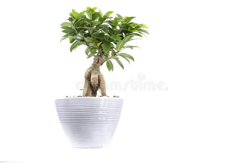 Huisinstallatie in pot royalty-vrije stock afbeelding
