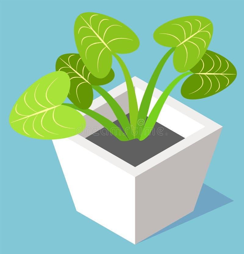 Huisinstallatie in Pot, Altijdgroene Bladeren Ingemaakte Bloem vector illustratie