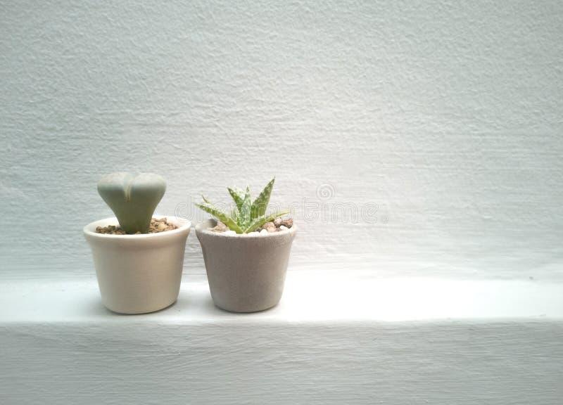 Huisinstallaties, succulents, cactus en binnen ingemaakte installaties en botanisch voor de binnentuin - beeld stock afbeeldingen