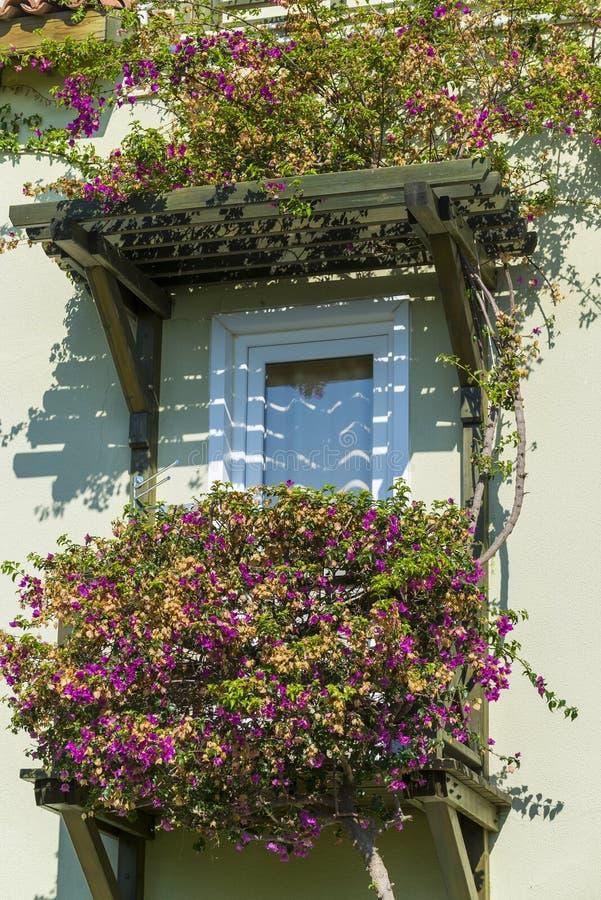 Huisvenster met natuurlijke bloemen wordt verfraaid die stock afbeeldingen