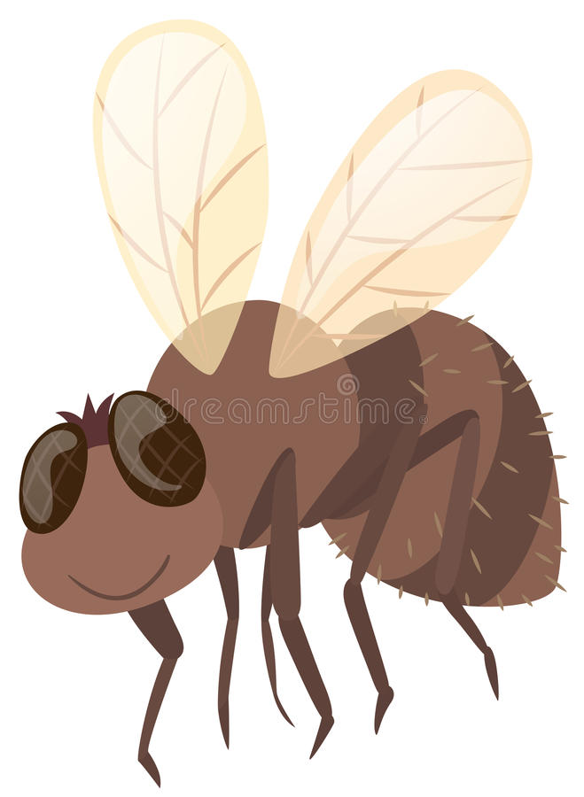 Huisvlieg op witte achtergrond stock illustratie